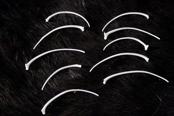 x10 Large Rattle Snake Rib Bones - Real Bone, Taxidermy - Grade A