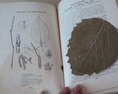 1920s Michigan Trees Book by Charles Otis Illustrated