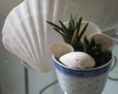 Tiny Chinese Blue and White Rice Teacup with Little Haworthia and Aloe Succulents