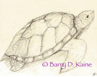 Sea Turtle pencil drawing 680 print