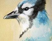 Portrait of a Blue Jay - Original Watercolour - Nightly Study Jan 26th