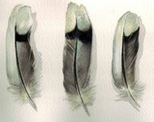 Feathers Watercolor - The Five - Mourning Dove Feather Study - March 21st