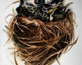 Robin's Nest with chicks - Original Watercolor - Nightly Study 336