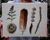 Nature Collection - Feather, Nest, Flower, Eggs, Snail Shells, Stick, - Original Watercolor Study
