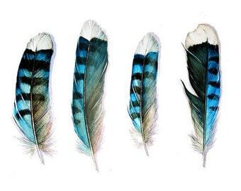 Four Blue Jay Feathers Art Card