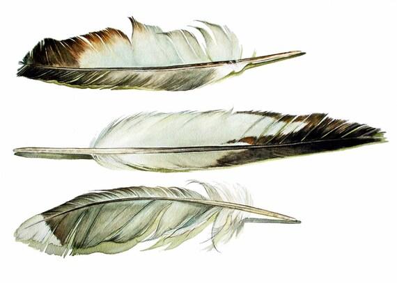 Shore Bird Feathers Blank Card