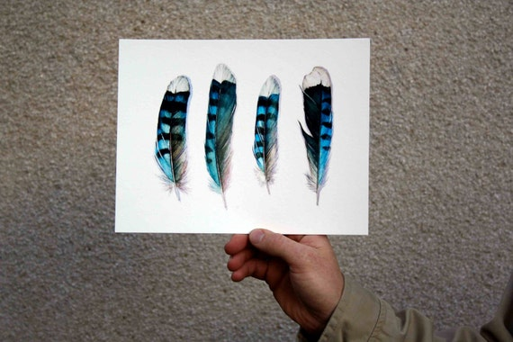 Four Blue Jay Feathers Archival Print