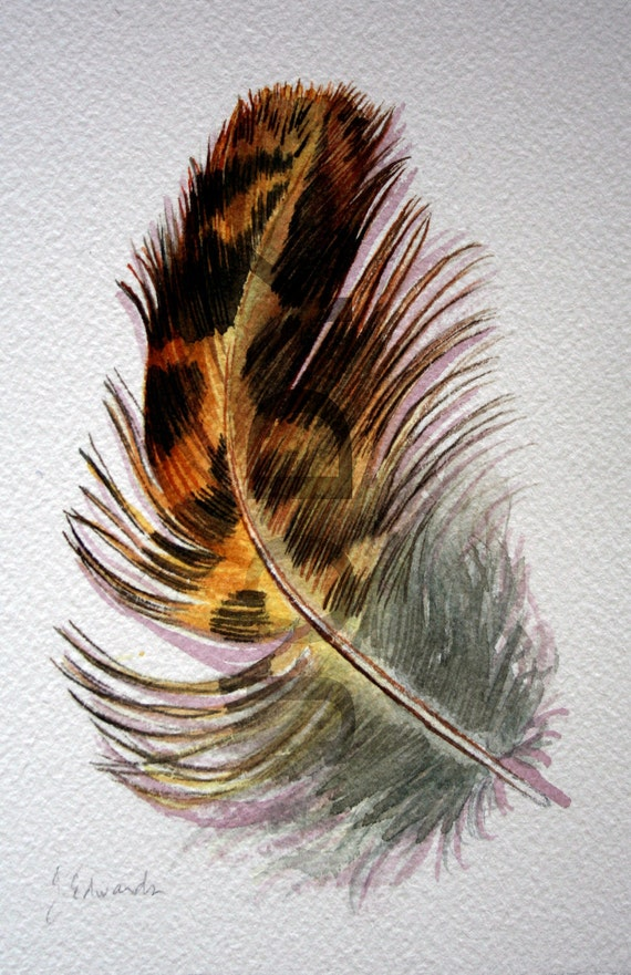 Roughed Grouse Feather Study - Original Watercolor - Nightly Study 353