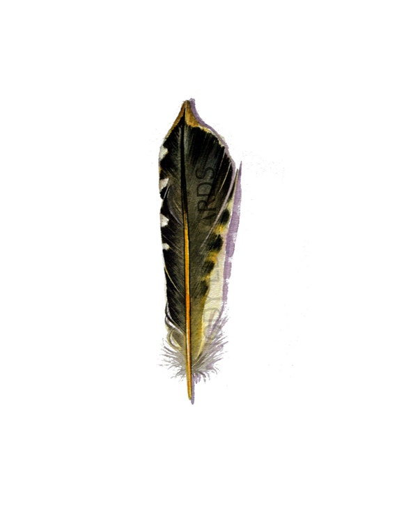 Northern Flicker Woodpecker Feather - Original Watercolor Feather Study - 359