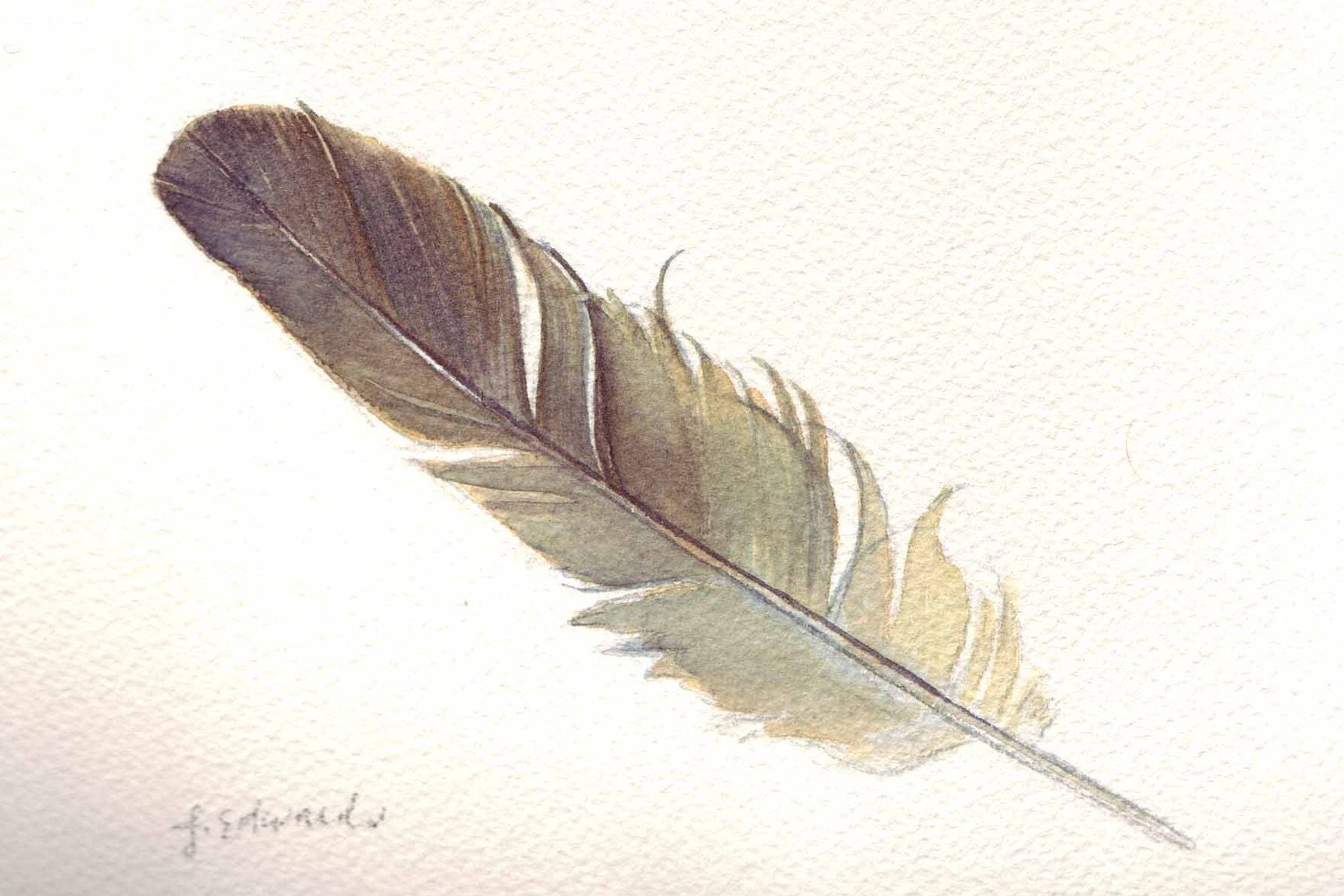 Small Bed Feather 123 Sparrow Feather Original Watercolour Nightly