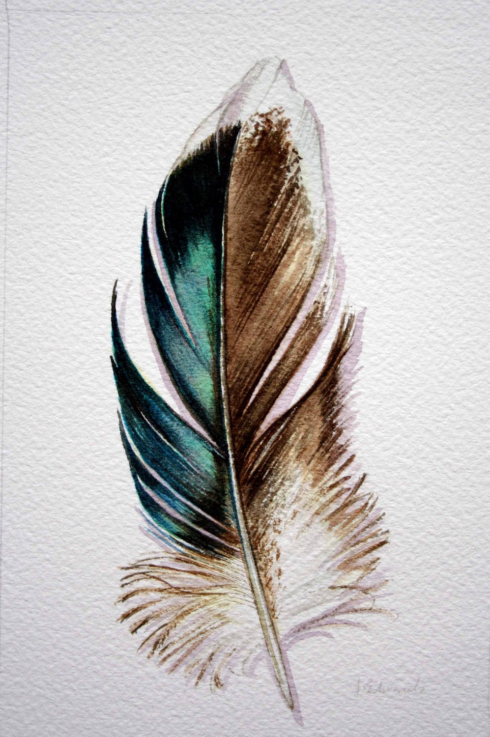 Original Watercolor Feather Study 176 Mallard feather from