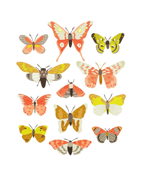 Art Print - Moth Identification Chart