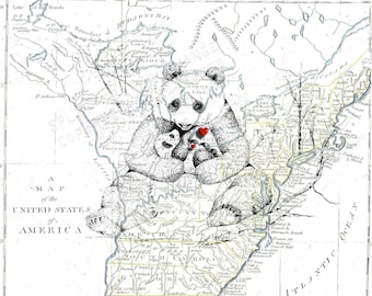 Mothers Gentle Devotion , Panda and Cub , 1791 Map of the UsA , Original Art Sketch