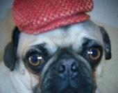 Doggy Newsboy Caps