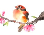5 x 7 oriole among blossoms greeting card