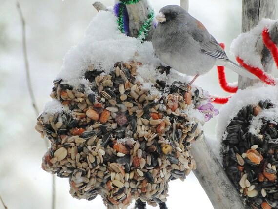Wild Bird Seed Feeder Flower - Organic - Self Hanging-No Waste cake