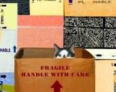 Blank Note Cards, Words of Wisdom Cards, Friendship, Photo Notecards, Cat Card, Cat Artwork by Deborah Julian