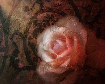 Coral Rose Fine Art Print 8x10