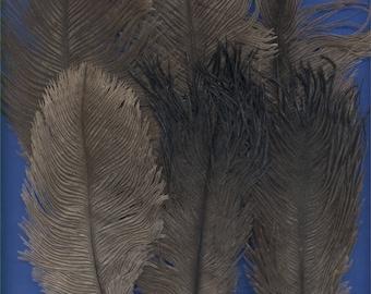 6 Feathers, Emu, Lot 2