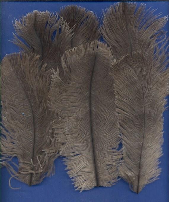 6 Feathers, Emu, Lot 1
