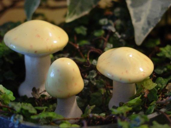 Enchanting Miniature Mushrooms