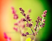 Blooming Lilacs, wall art, home decor, small space art, nature, digital photo, colorful art, office art, Minnesota flower, spring flower