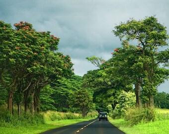 Peaceful Drive Through Kawi Hawaii, fine art  photo,  wall art, home decor, office art, landscape. island photo, landscape photo, country,