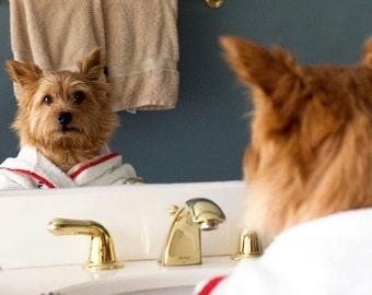 Norwich Terrier, Bathroom art, dog photo, wall art, dog humor, gift art, small space art, fun art, small art, kids room art, bathroom art,