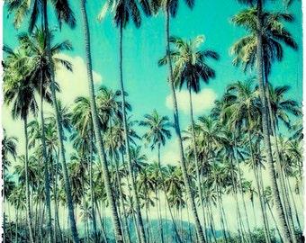 Palm Trees Kauai  Hawaii, digital  photo on paper for wall art, office art, home decor, resort art, hotel art, office art, tropics, resort,