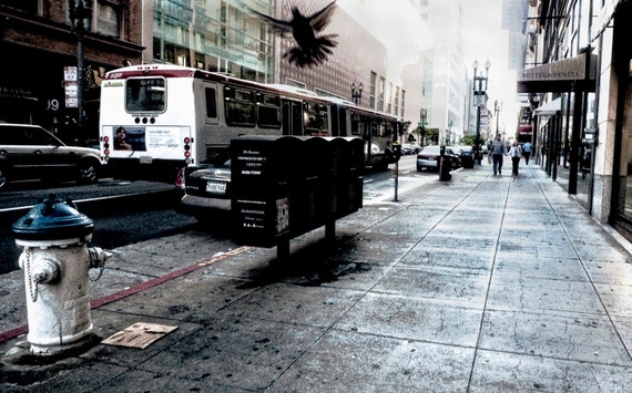 San Francisco Streets, Bird in Flight, 10x16 fine art photo, textured paper, wall art, office, great room and home decor