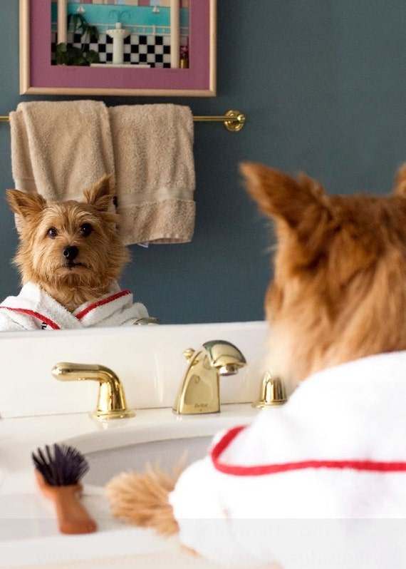 Norwich Terrier Bathroom, dog art photo, wall art, dog humor, fun art, small art, kid room art, bathroom art,