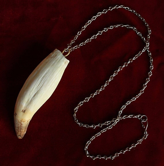 HUGE Real Antique Tiger Tooth Necklace