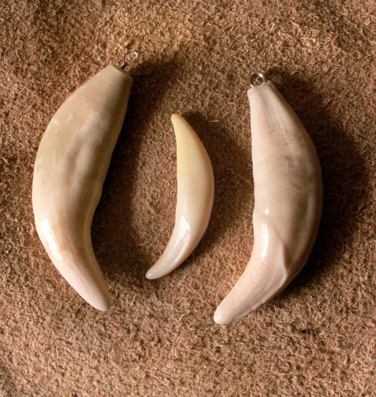 wolf tooth bone