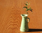 Tiny Green Pitcher with True Miniature Live Ficus Plant
