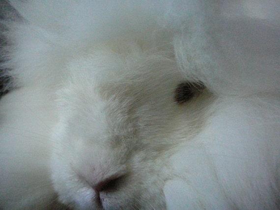 Hand Raised Pure Angora Rabbit Fiber