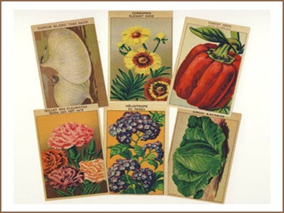 144 Vintage French Flower and Vegetable Labels All Different