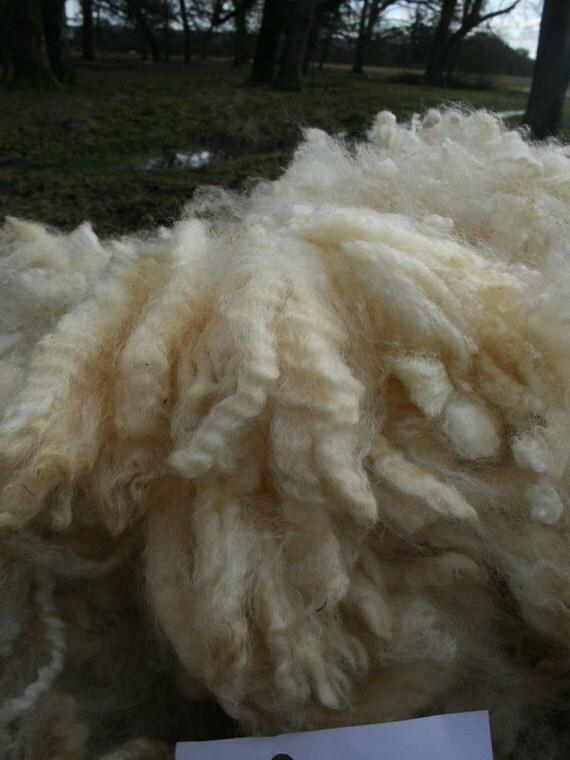 White Romney Fleece - Sugar Foot