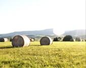 Summer Photograph, Field, Meadow, Gold, Sunshine, Pale Lemon, Grass Green - Haystacks