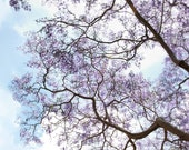 Tree Photograph - Nature, Summer, Lavender, Lilac, Flowers, Mother's Day - Purple reign