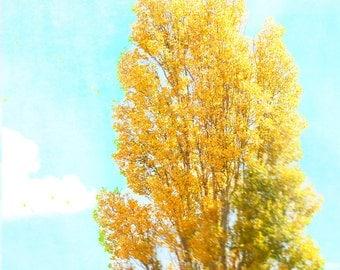 Tree Photograph, Poplar, Yellow Gold, Cyan, Autumn, Sky, Absinthe Green - Golden Zepher