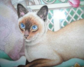 vintage cat  plate bone china  home decor cat aynsley spring cat siamese england ornate