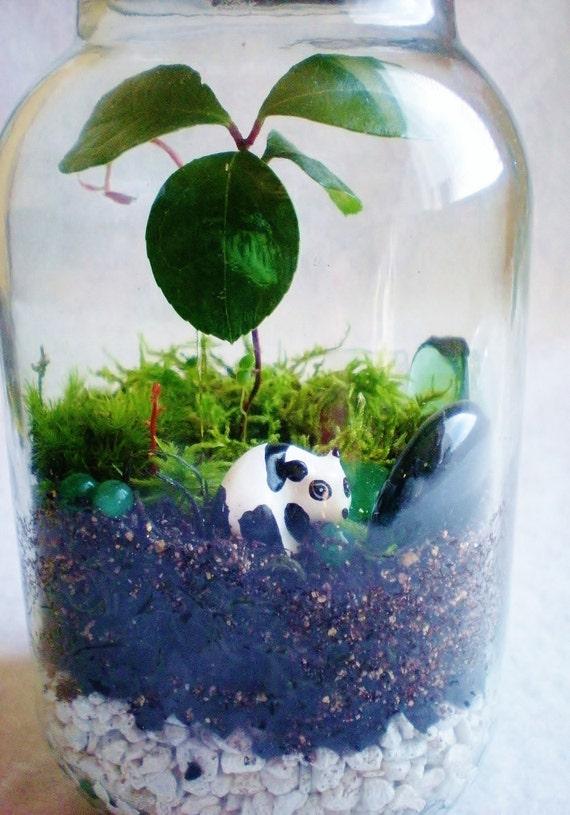 Wintergreen Teaberry Panda Terrarium Mason Jar Fairy Garden Fern Mood Moss Living Art Green Jade Baubles Gems Sea Glass Holder Indoor Garden