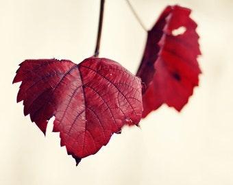 Autumn Leaves - Photograph