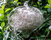 Hanging Glass Terrarium, Glass, Spanish Moss. Great for HOME or OFFICE. Unusual Gift.  Terrariums by mossterrariums on Etsy.