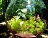Hydroculture Terrarium, Vase, Mushroom, Plant, Moss. Terrariums by mossterrariums on Etsy.