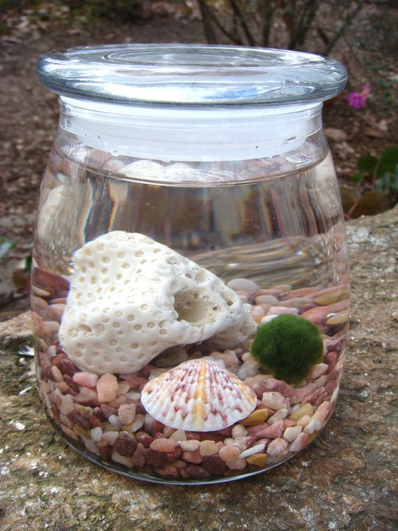Marimo Moss Ball Vibe Jar, Living Water Terrarium, Japanese moss ball, Great for HOME or OFFICE. Nice Unusual Gift. Terrariums by mossterrar