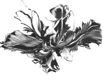TULIPA I Original Charcoal Pencil Drawing