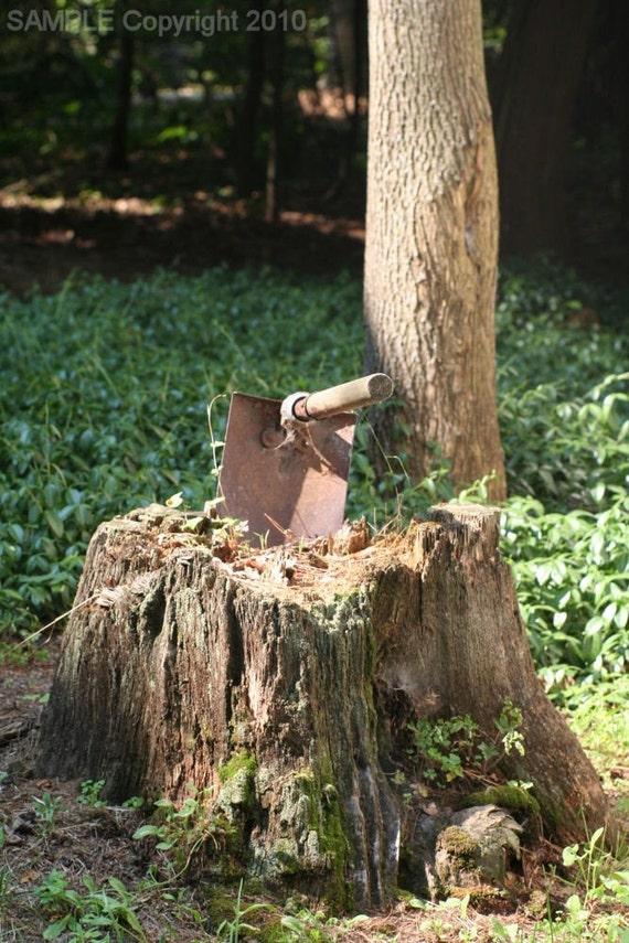 Trenching Tool in Stump 8x10