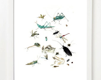 Watercolour styled bugs - A3 fine art paper print