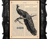 FREE SHIPPING WORLDWIDE CROWNED PEACOCK PRINT A ROYAL BIRD on a Antique 1890 Book Page